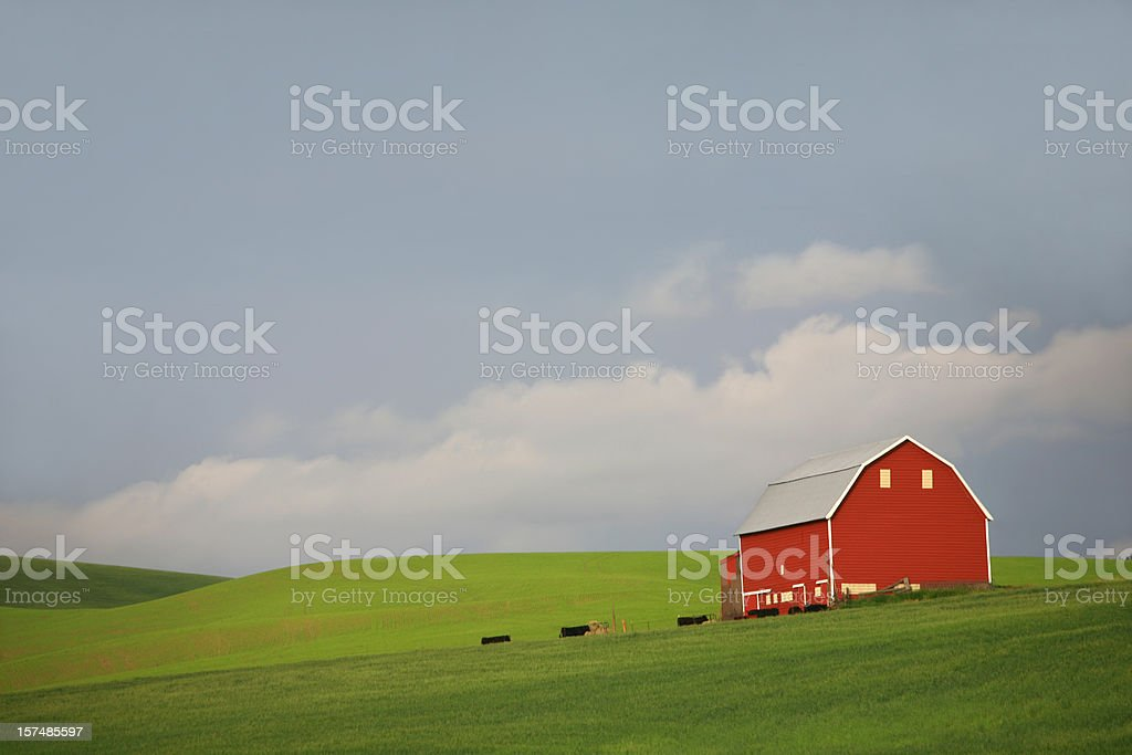 Red Barn and Cows royalty-free stock photo