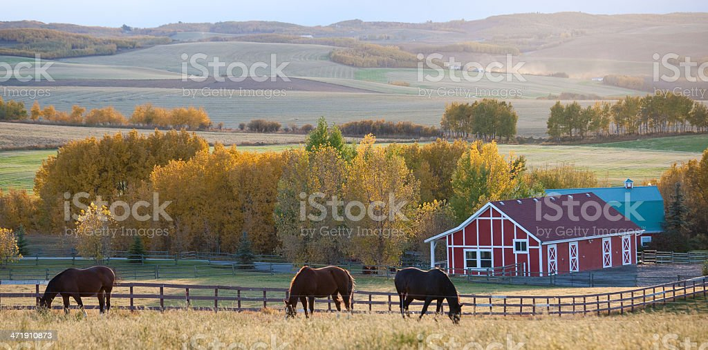 Red Barn and Horses on the Prairie stock photo