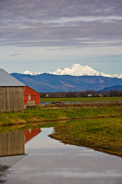 Red barn and Mt Baker, WA stock photo