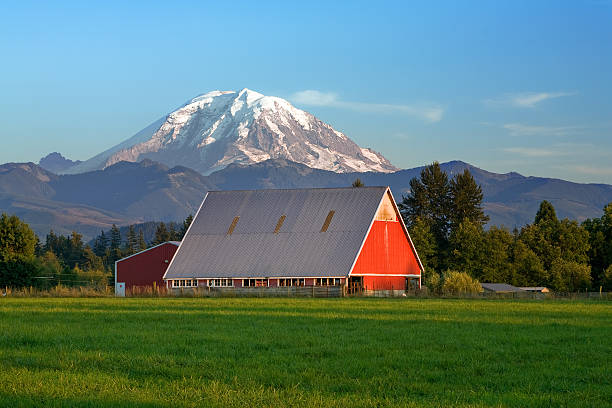 Red barn and Mt Rainier stock photo