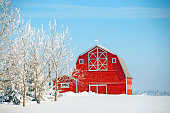 Red barn and snow covered field with blue sky and poplar trees