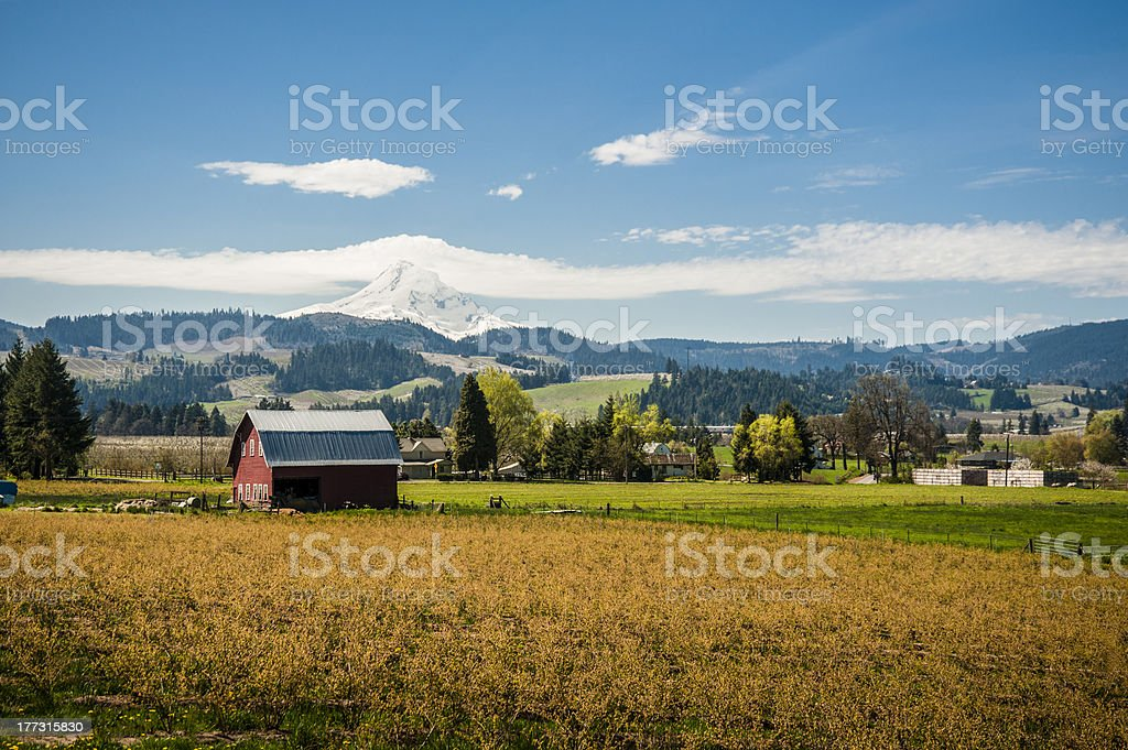 Red barn, apple orchards, Mt. Hood stock photo