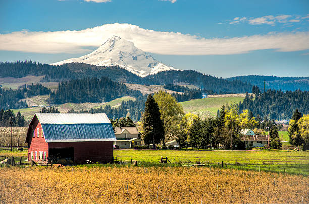 "Red barn, apple orchards, Mt. Hood ""Red barn among apple orchards below a snowy mountain, Hood River Valley, OR"" hood river valley stock pictures, royalty-free photos & images"