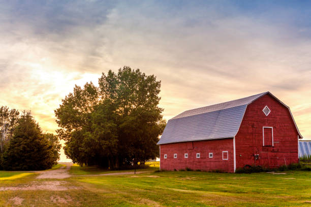 red barn at sunset - rural scene stock pictures, royalty-free photos & images