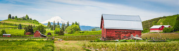 Red barn green farm agricultural landscape white mountain peak panorama Red wooden barns set amongst the vibrant green farmland and crop fields of the Pacific Northwest overlooked by the iconic snow capped cone of Mt Adams (3743m), Washington, USA. ProPhoto RGB profile for maximum color fidelity and gamut. hood river valley stock pictures, royalty-free photos & images