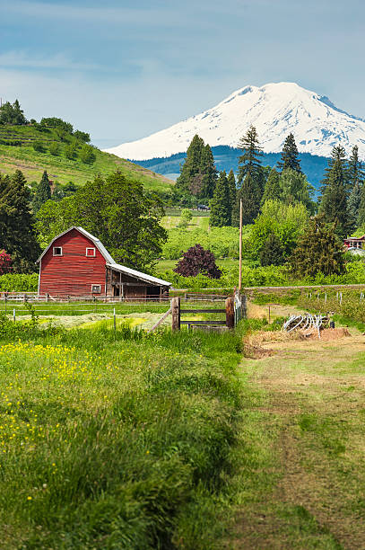 Red barn green farmland white mountain idyllic rural landscape Wooden red barn set amongst the vibrant green landscape, orchards, crops and well-tended farmland of Oregon, overlooked by the dramatic snow capped peak of Mt. Adams, Washington, USA. ProPhoto RGB profile for maximum color fidelity and gamut. hood river valley stock pictures, royalty-free photos & images
