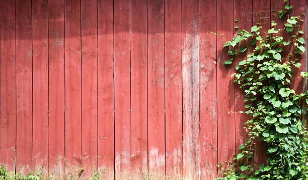 red barn green vine background stock photo