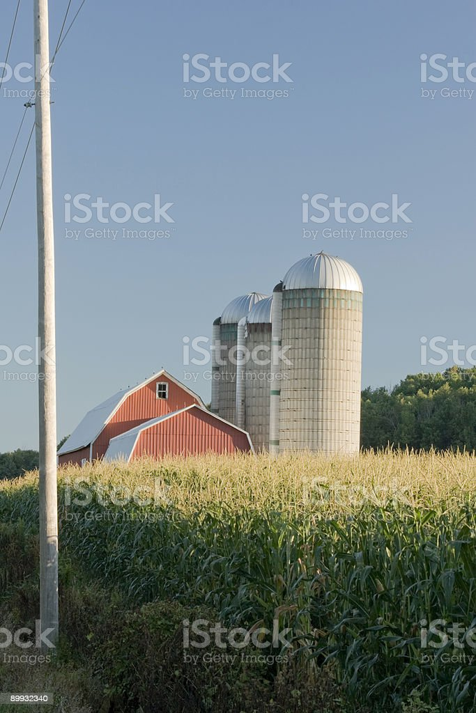 Red Barn in Corn Field 2 royalty-free stock photo