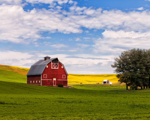 Red Barn in the Palouse Red Barn and canola field in the Palouse barn stock pictures, royalty-free photos & images