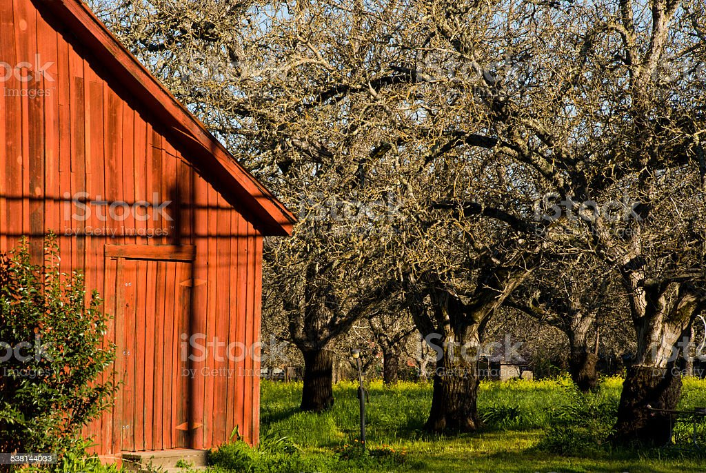 Red barn in walnut orchard near Calistoga Napa Valley California stock photo
