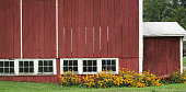 red barn with yellow flowers in front