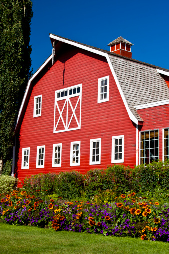 Flowers are lined up in front of a bright red barn