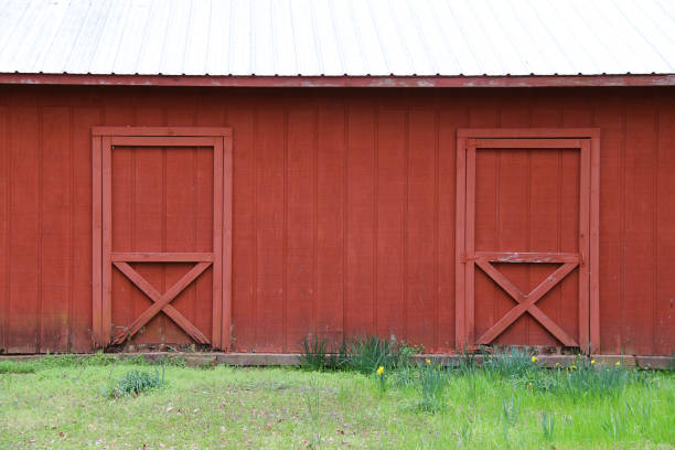 red barn white roof double doors grass field stock photo