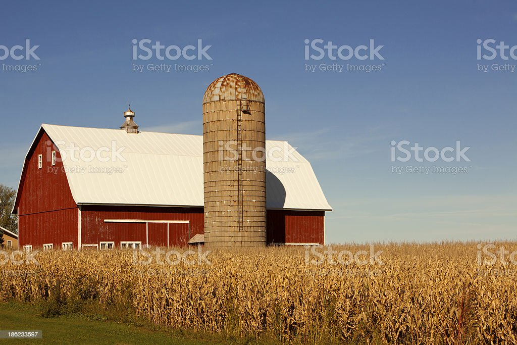 A red barn with a silo and a surrounding corn field stock photo