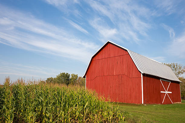 Red Barn with Corn and Dramatic Sky stock photo