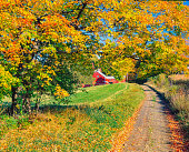 RUSTIC RED BARN AND MAPLE TREES WITH COUNTRY ROAD SOUTH OF DANVILLE, VERMONT