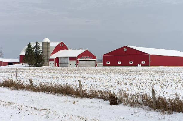 Red barns covered in snow on a Winter's Day. stock photo