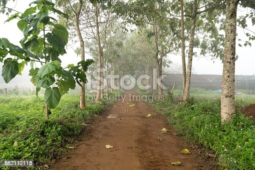 Red basalt road with two straight rows of trees