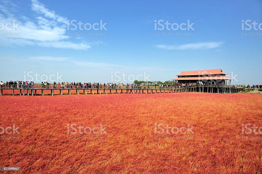 red beach stock photo