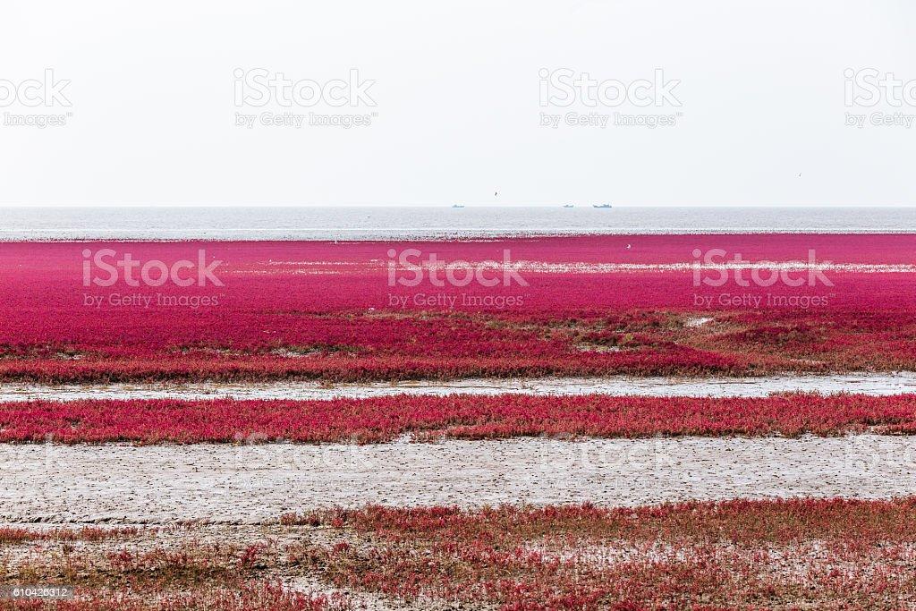 Red beach. stock photo