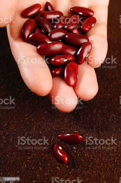 Red Beans In Hand Stock Photo - Download Image Now