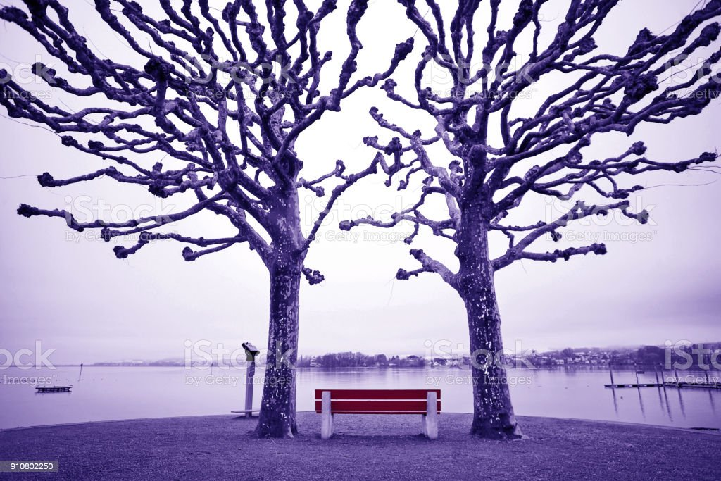 Red bench and funny sycamore trees. Arbon, Switzerland, Boden lake stock photo