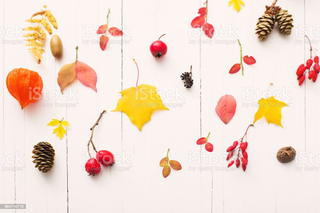 red berriaes and  autumn leaves on white wooden background royalty-free stock photo