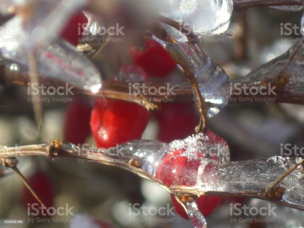 Red Berries and Ice stock photo