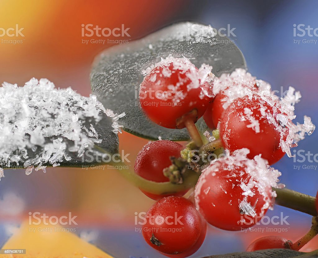 red berries holly with snow royalty-free stock photo