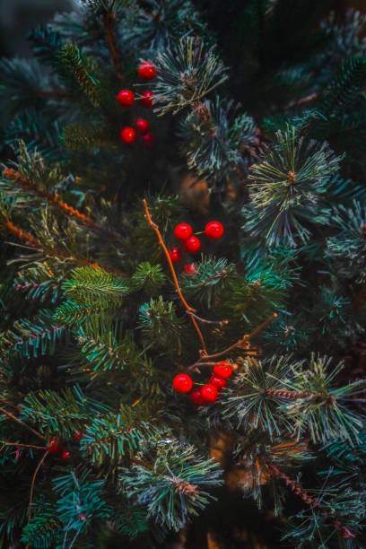 Red Berries In Christmas Tree stock photo