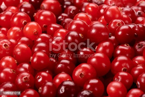 Red berries of cranberries close-up
