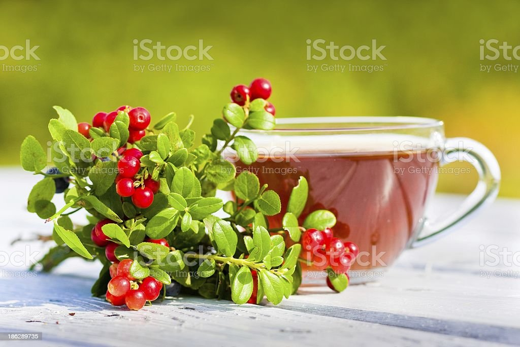 Red bilberry and blueberries with tea. Focus on berries royalty-free stock photo