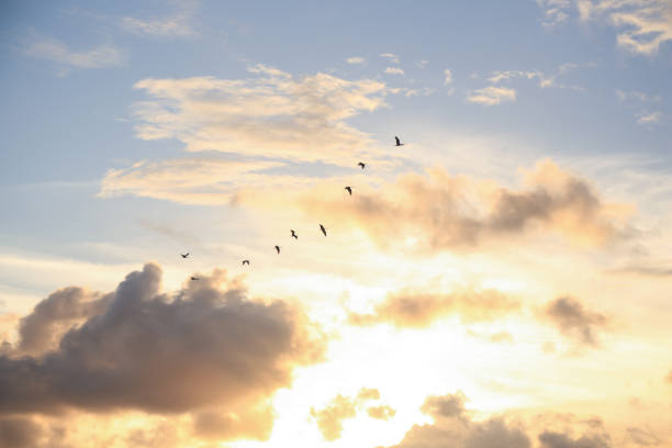 Red birds flying at sunset picture id852407708?b=1&k=6&m=852407708&s=612x612&w=0&h=mnmefqgordbznx28szvfbqumndrhrwbrovu857ckw3q=
