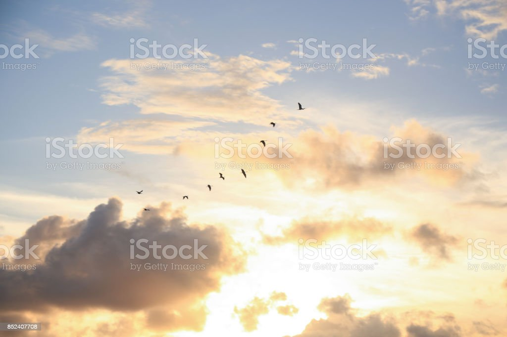 Red birds flying at sunset stock photo