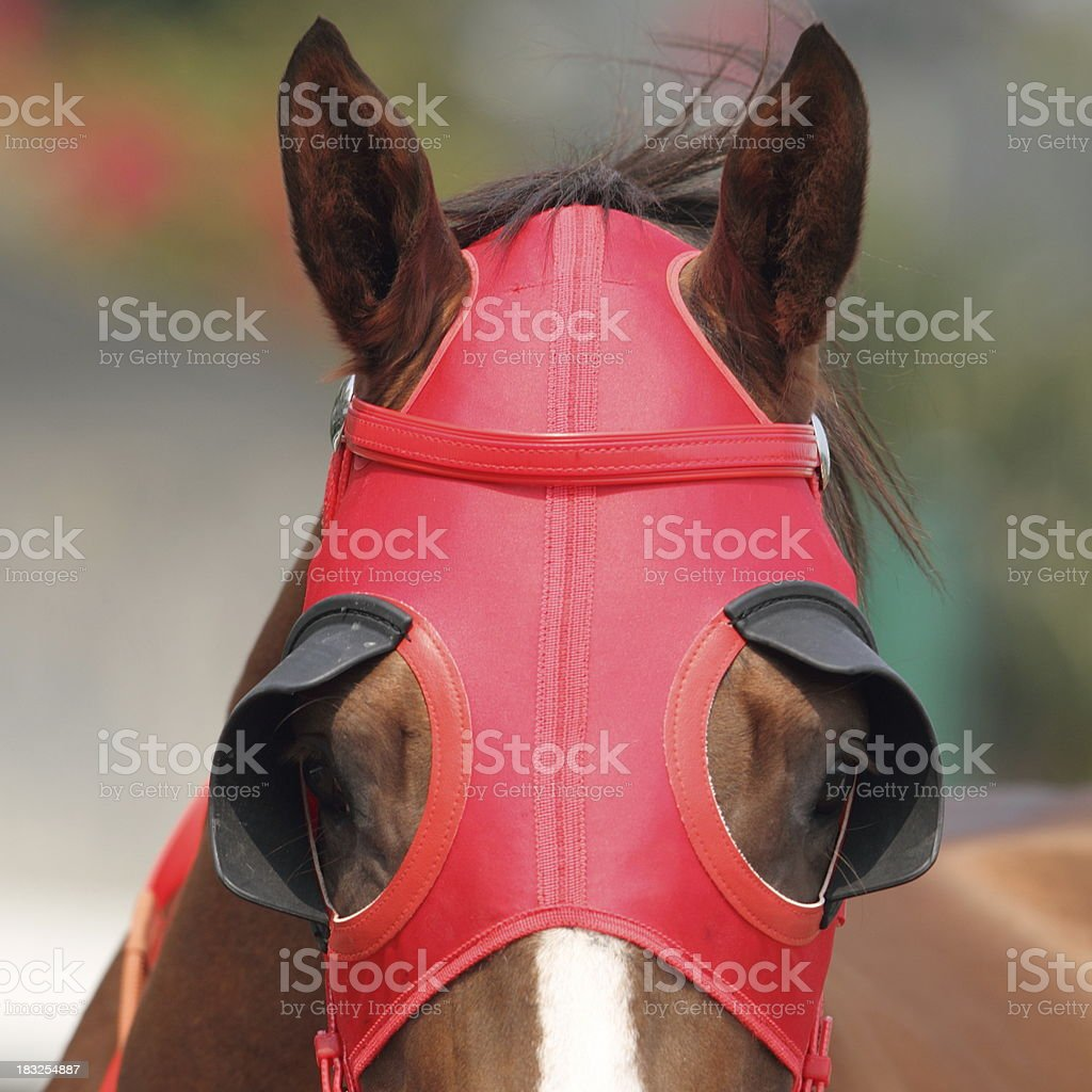 Red Blinders stock photo