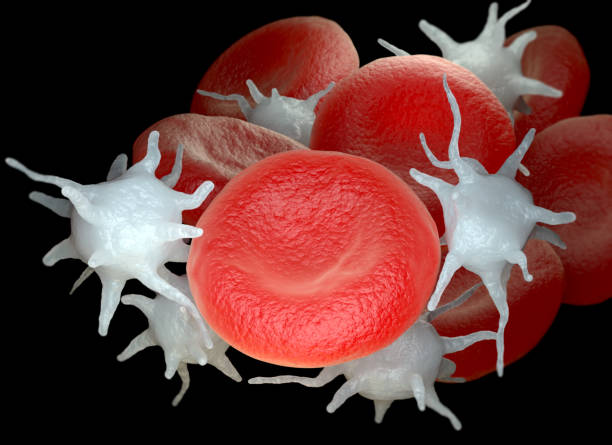 Red blood cells and activated platelets or thrombocytes stock photo