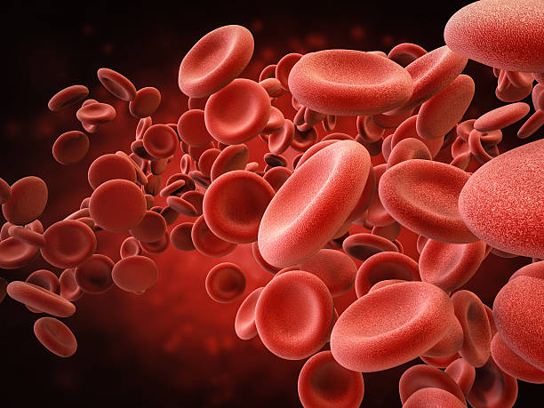 red blood cells in vein - foto stock
