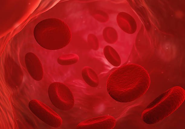 Red Blood cells under microscope stock photo