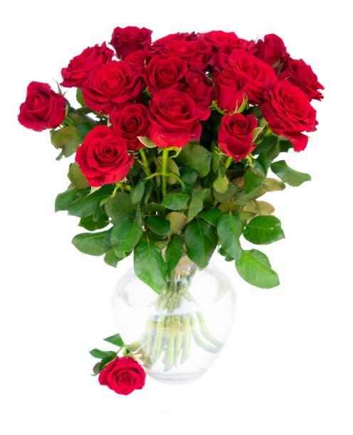 Red blooming roses picture id886643176?b=1&k=6&m=886643176&s=612x612&w=0&h=0ko6fz y1 iahaekwsxhdty6wmyeeqzp  hrzhkp1sc=