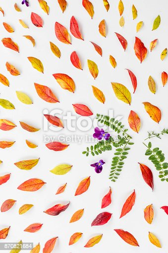 867774250istockphoto Red blueberry autumn leaves 870821684