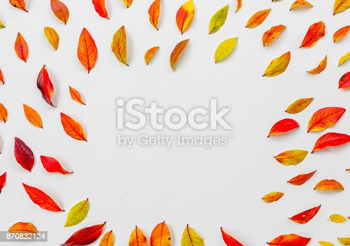 867774250 istock photo Red blueberry leaves 870832124