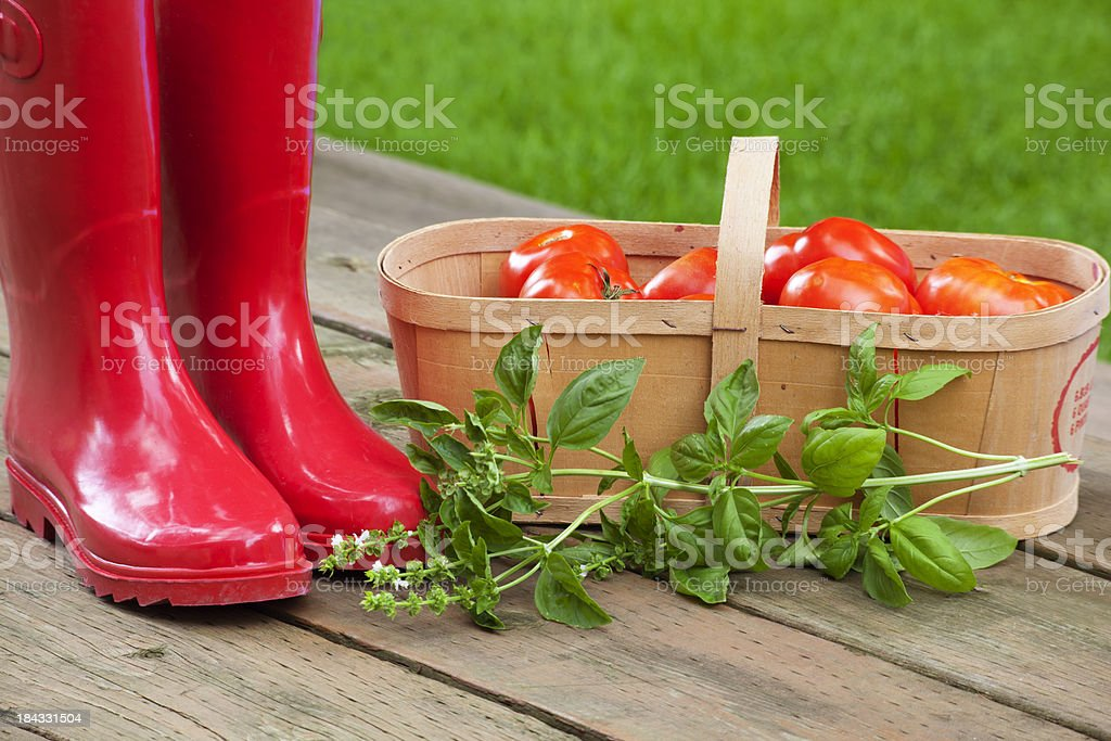 Red Boots Basil and Tomato Basket stock photo