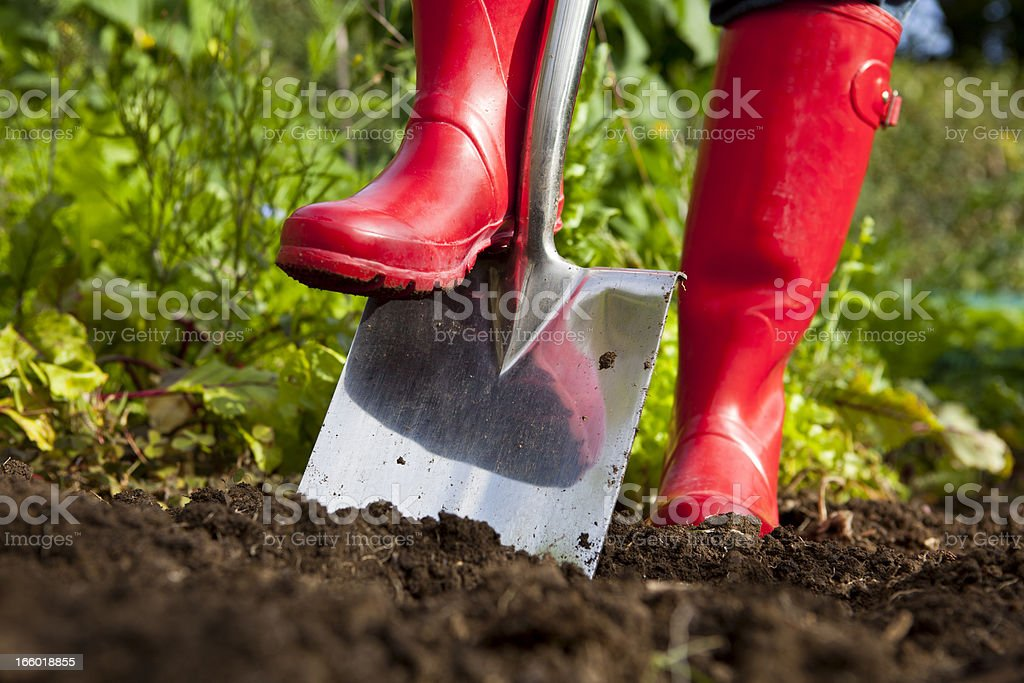 Red Boots Digging Over Soil With Spade in Garden stock photo