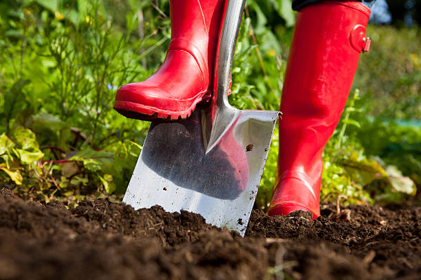 red boots digging over soil with spade in garden - 鏟 個照片及圖片檔