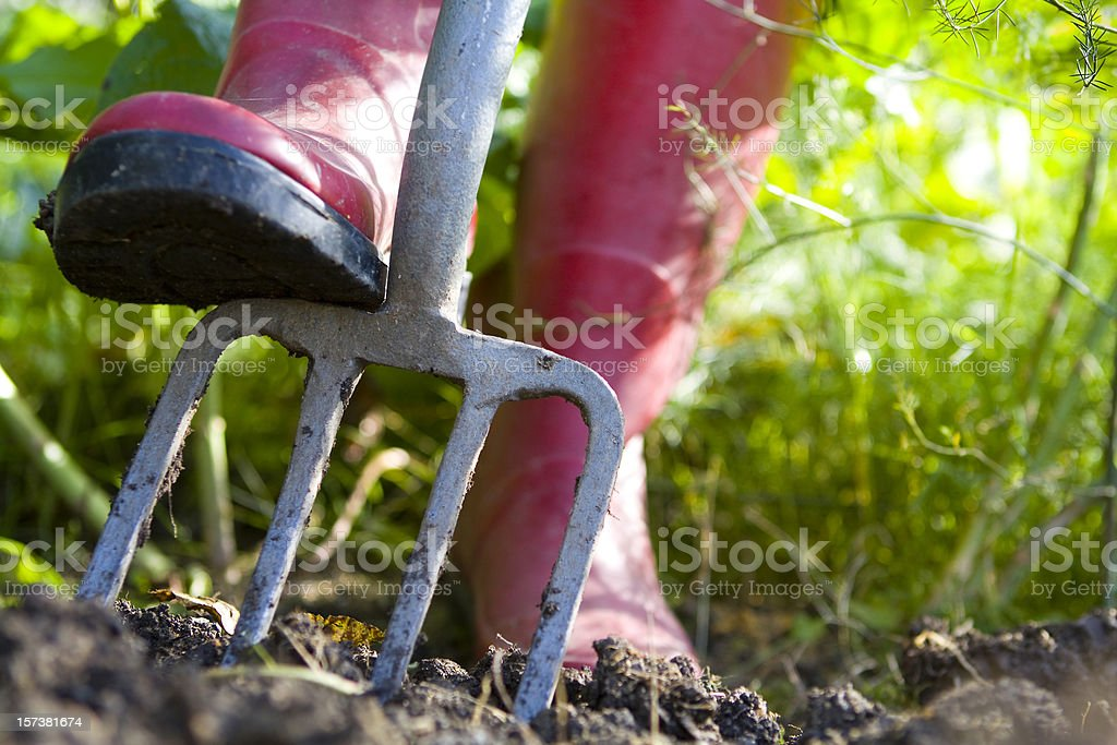 Red Boots Digging with Fork in Vegetable Garden stock photo