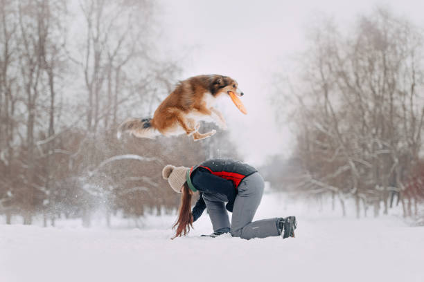 Red border collie and owner play on a winter walk picture id1187618171?b=1&k=6&m=1187618171&s=612x612&w=0&h=j4kdxbbtqgmfianf0rbkp61 pkb2vdrgjz5aizfzkl4=