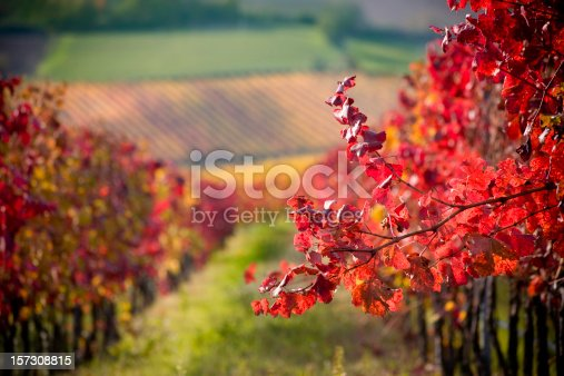 Detail of a red branch in a grape field. Autumn colors.