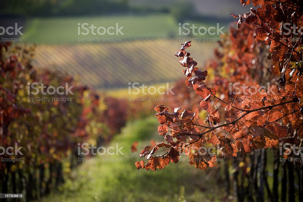 Red branch stock photo