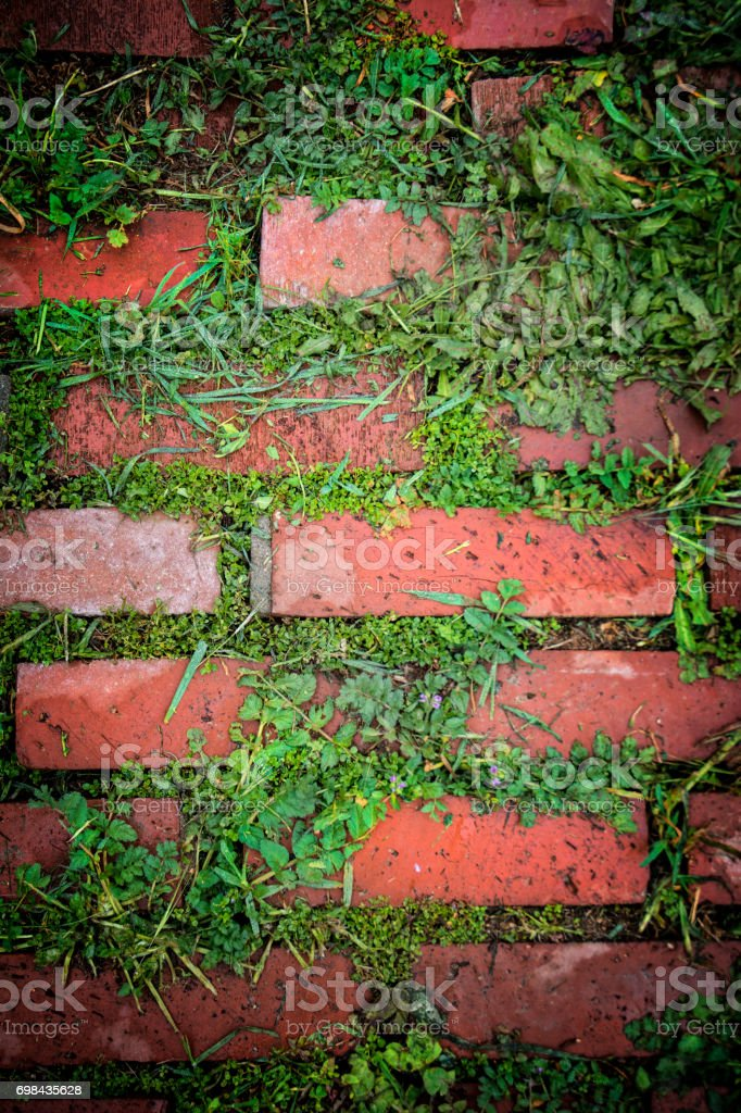 Red Brick Patio Pavers With Green Weed growth stock photo