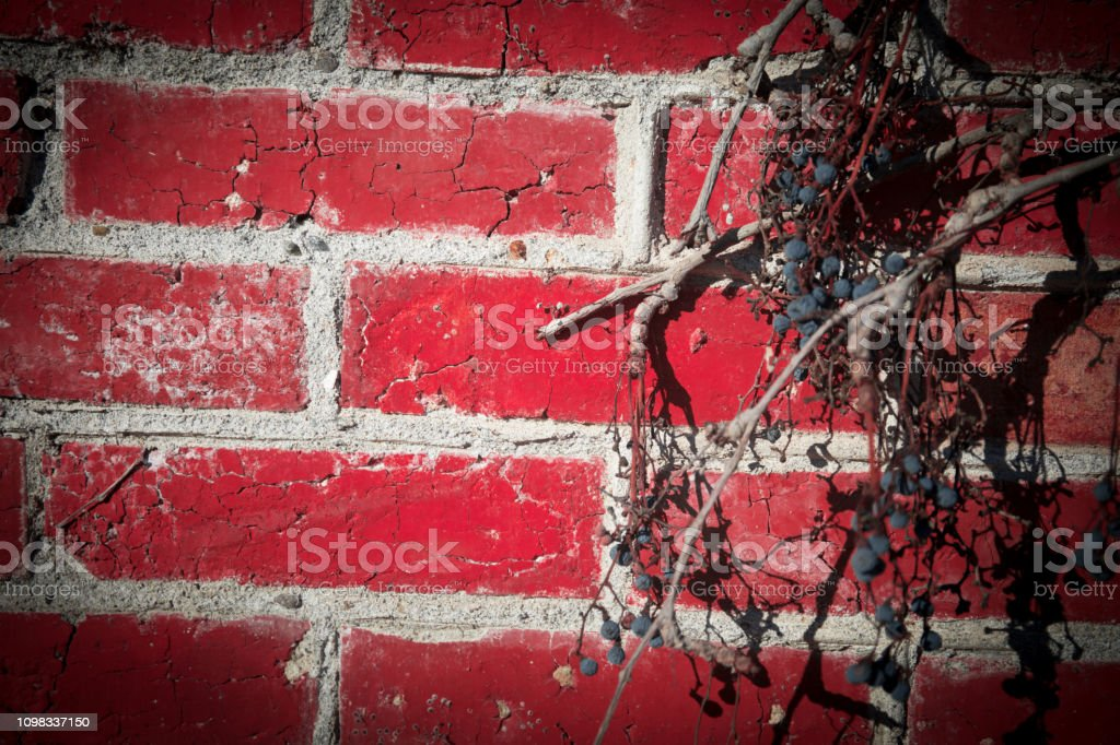Red Brick Wall Framed by Leafy Foliage. beautiful wall of red bricks...